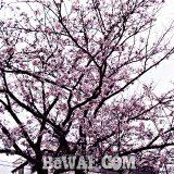瀬田川へ (4月4日)