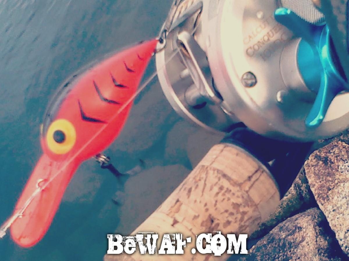 setagwa-1-30-2015-2