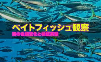 ベイトフィッシュの観察 ~西の湖 オイカワ編~ 9