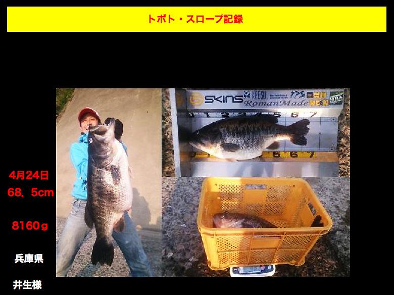 toboto-big-bass