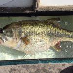 7300gのデカバス釣れる!! スキナー湖 (アメリカ) 6