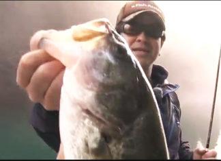 和歌山県・合川ダムでミドスト実釣動画(松本猛司)