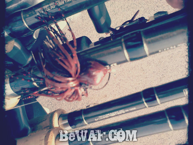 biwako bass chouka 4gatu12nichi-3