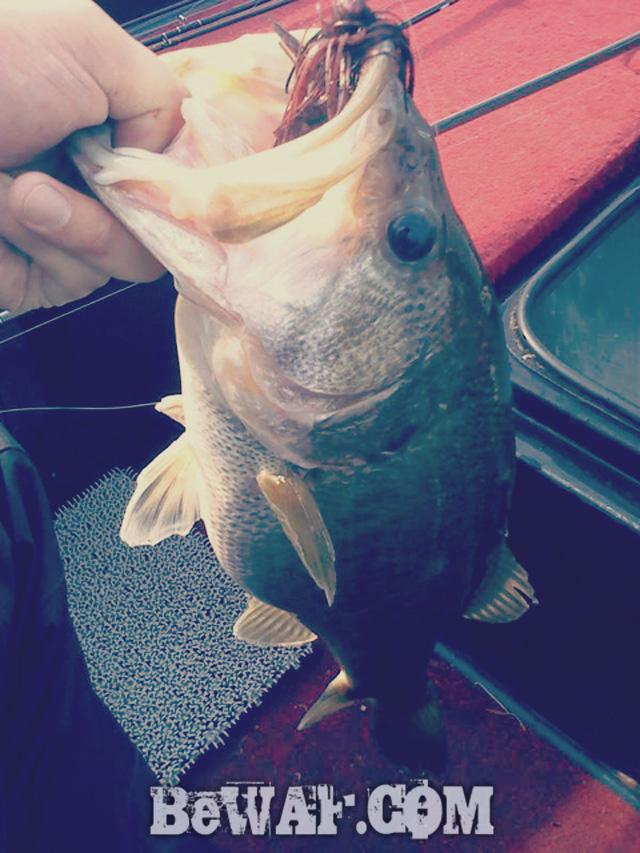 biwako bass chouka 4gatu12nichi-6