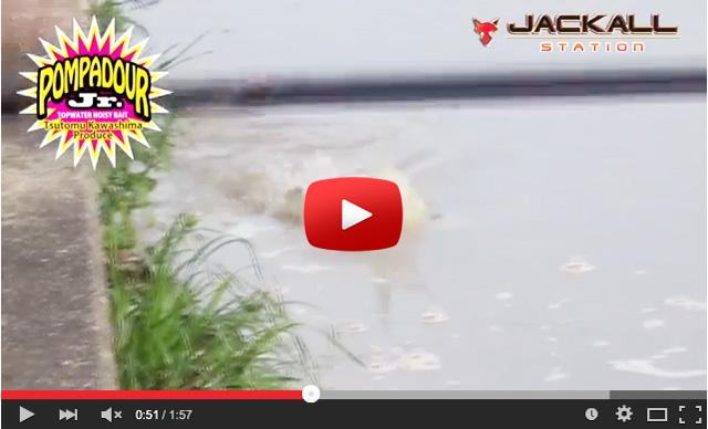jackall-pobadolls-nabazu