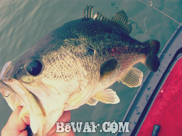 biwako bass fishing guide 2015 chouka 6