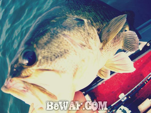 biwako bassfishing guide chouka 2015 biwako 9