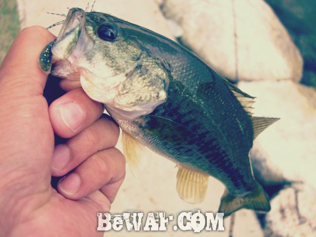 setagawa bass chouka-5