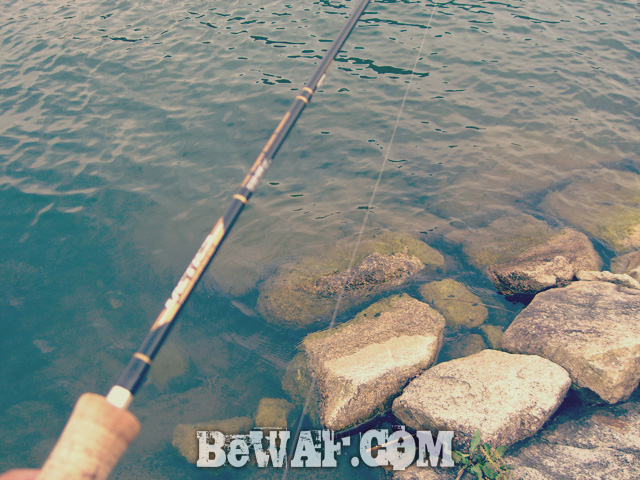 setagawa bass fishing chouka-2