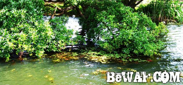biwako bass turi point guide basho14