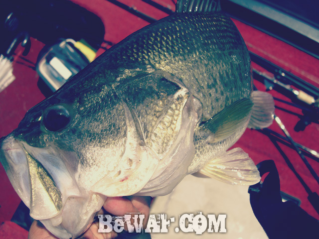 biwako black bass 60 chouka 12