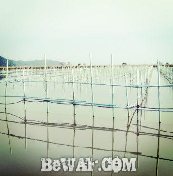 滋賀県・西の湖バスフィッシング (ボートポイント場所紹介) 18