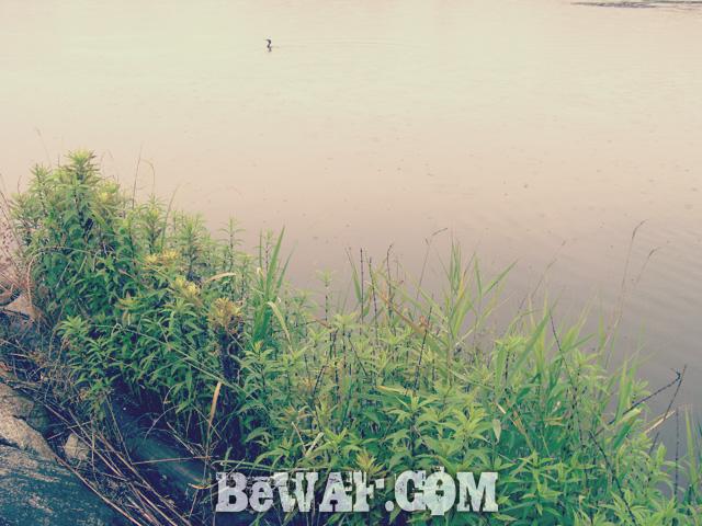 setagawa bass chouka 3