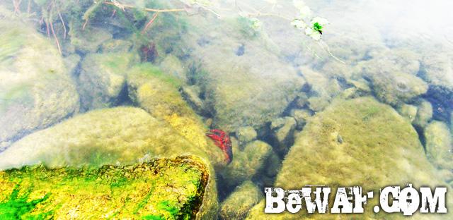 setagawa bass turi chouka 4