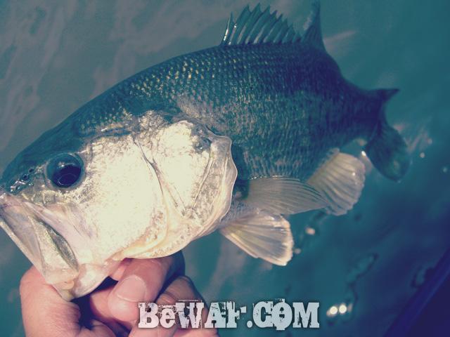 biwako bass chouka 16