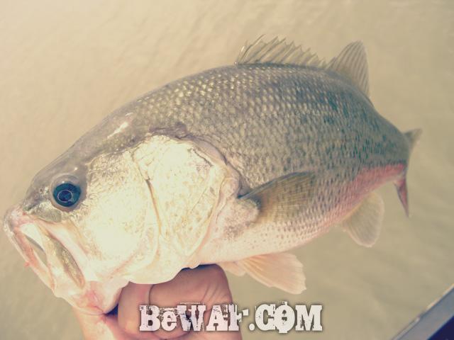 biwako bass chouka 17