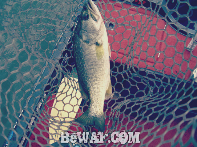 biwako bass fishing guide kakuyasu 27