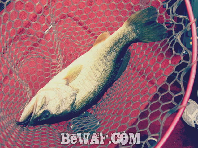 biwako bass fishing guide kakuyasu 31