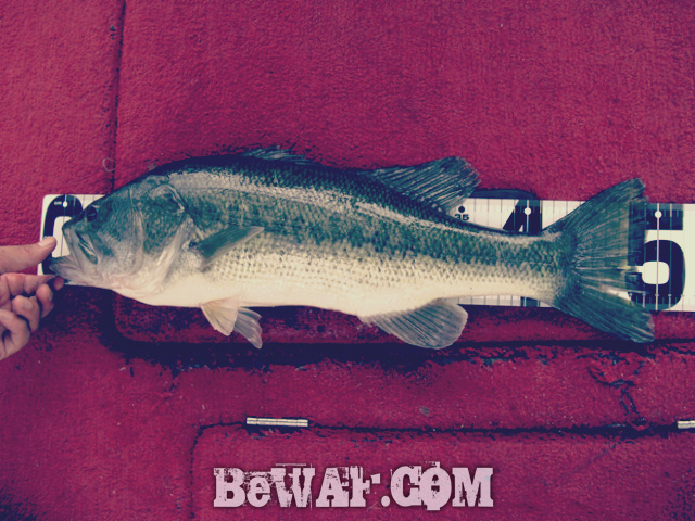 biwako bass fishing guide kakuyasu 35