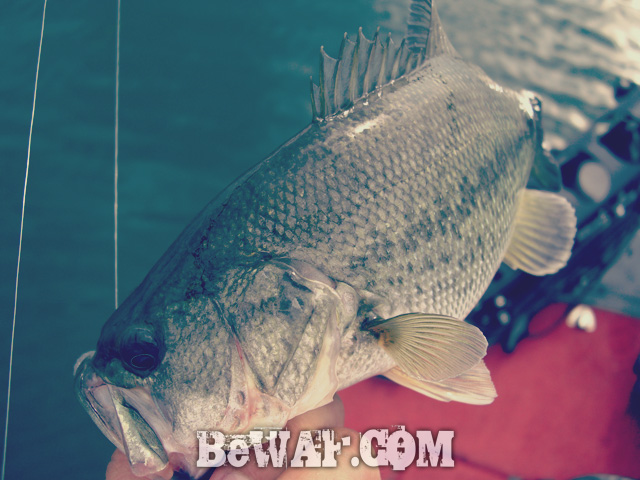 biwako bass fishing guide kakuyasu 6