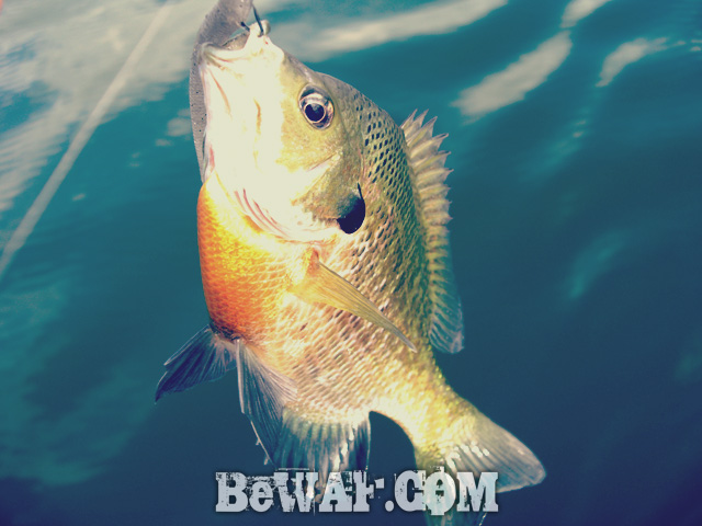 biwako bass fishing guide kakuyasu 7