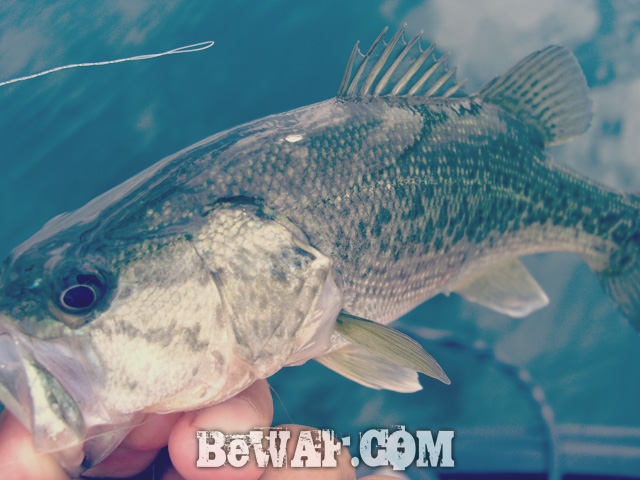 biwako bass fishing guide kakuyasu 8