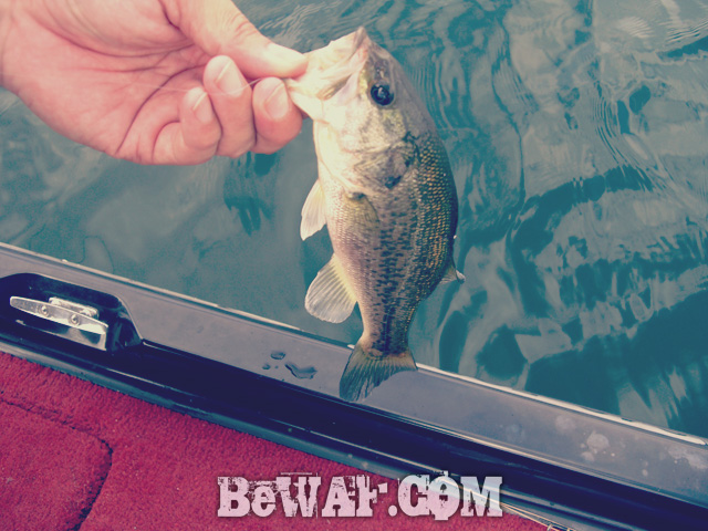 biwako bass fishing guide kakuyasu 9