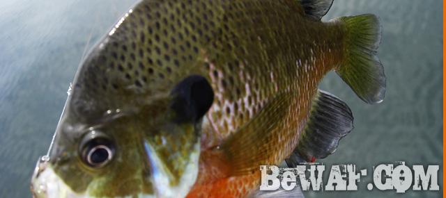 biwako bass fishingu guide chouka 13