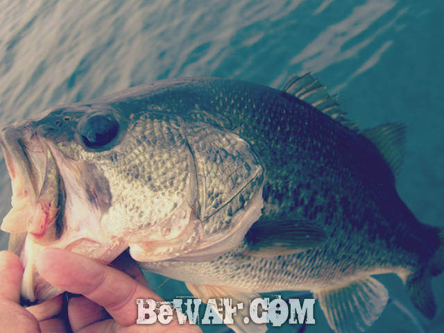 biwako bass fishingu guide chouka 16
