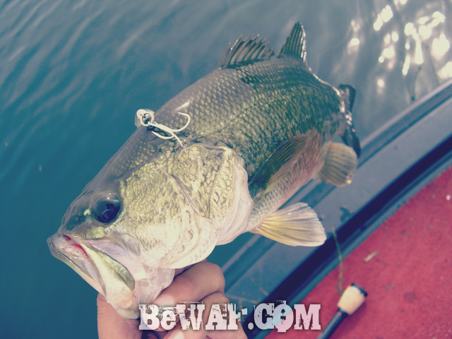 biwako bass fishingu guide chouka 7