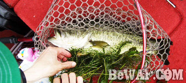 biwako bass fishingu guide chouka 9