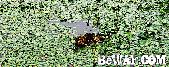 biwako bassfishig guide service 2015 14