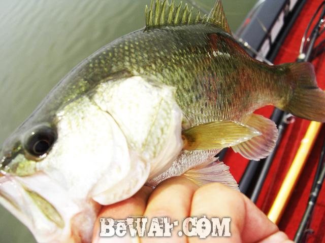 biwako bassfishig guide service 2015 18