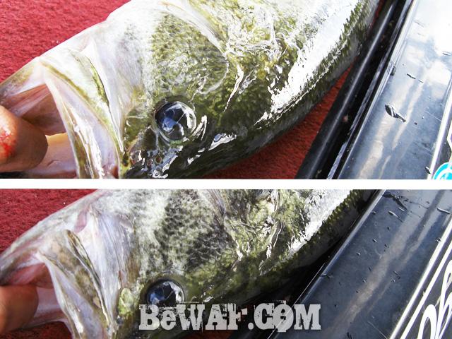 biwako bassfishing guide blog 2015 chouka 24