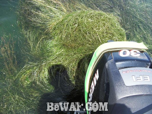 biwako-bassfishing-guide-blog-2015-chouka-27