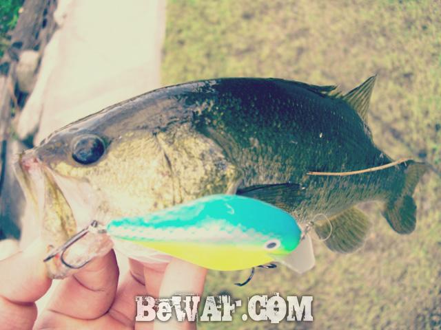 crank bait jisaku bass fishing f