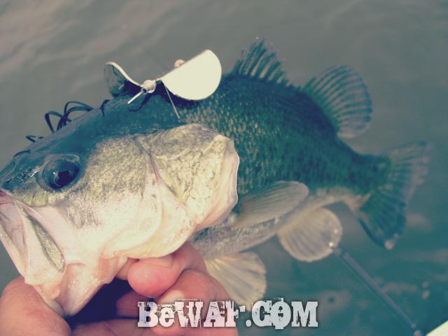 nishinoko bass fishing chouka 12