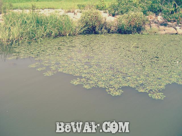 15.biwako bass guide service chouka