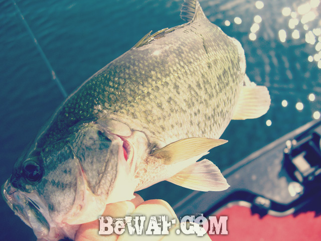 biwako bass fishing guide gekiyasu rental 10