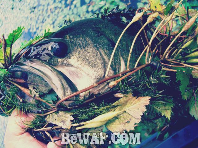 biwako bass punching chouka natu 5