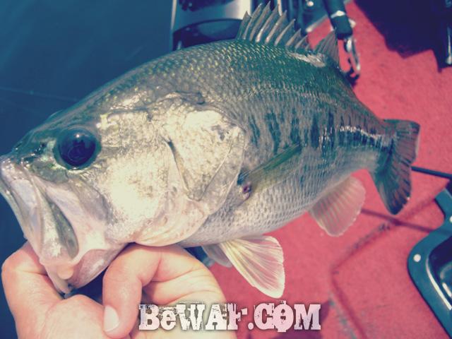 biwako bass turi blog chouka guide 10