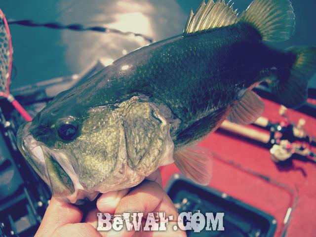 biwako-bass-turi-blog-chouka-guide-25