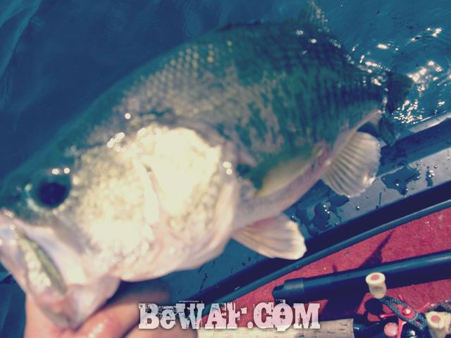 biwako-bass-turi-blog-chouka-guide-26