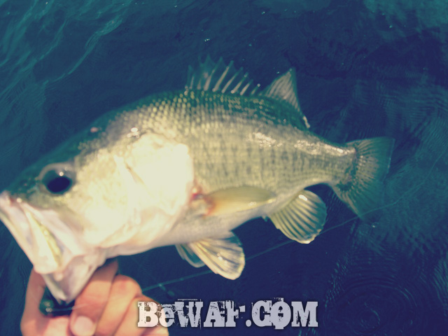 biwako black bass jackall deps guide 16