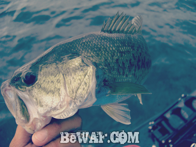 biwako black bass jackall deps guide 18