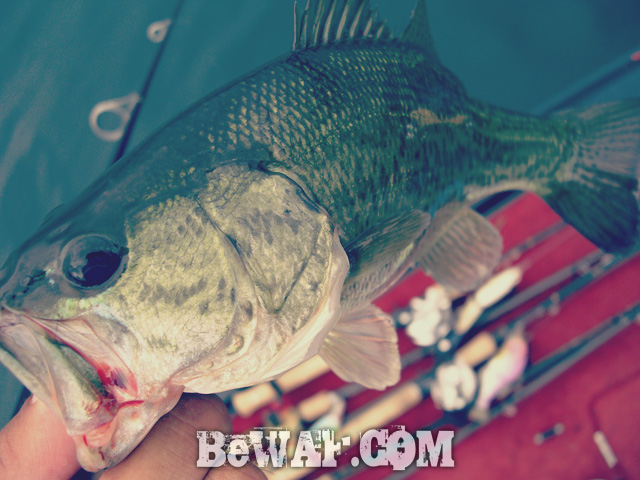 biwako black bass jackall deps guide 7
