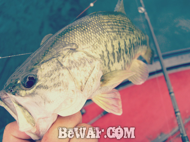 biwako black bass jackall deps guide7