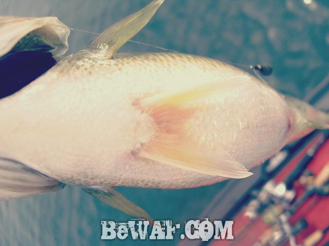 biwako hokuko bass turi blog chouka guide 12