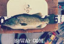 お客様からの釣果:大阪の佐々木様~フロッグで50cm!! 1