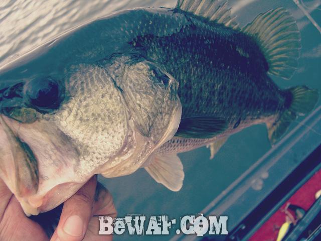 WFG biwako bass fishing guide 23